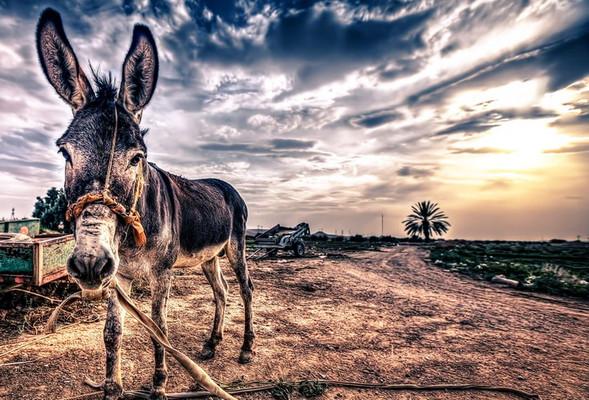 Graveyard Keeper: где взять масло для осла?
