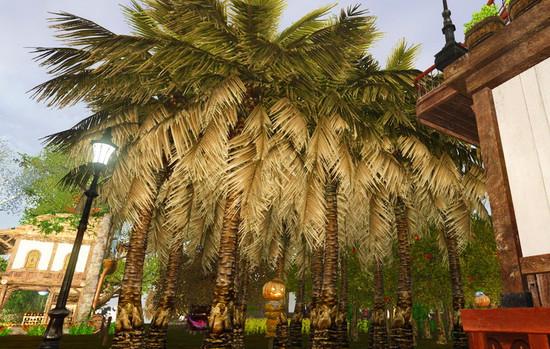 Кокосовые пальмы в ArcheAge